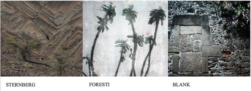 STERNBERG FORESTI BLANK